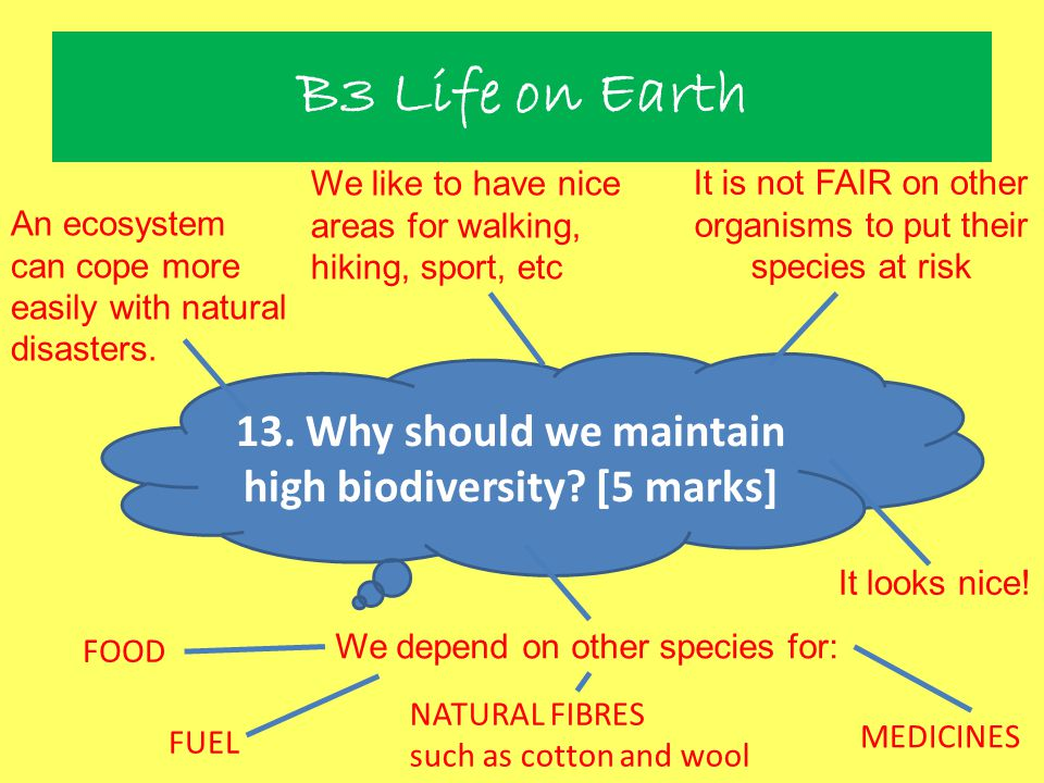 13. Why should we maintain high biodiversity [5 marks]
